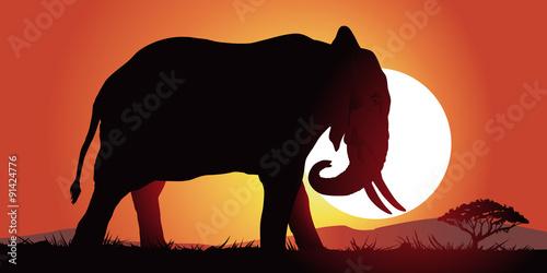Plakát, Obraz Slon-couche de soleil