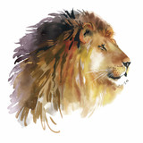 Fototapety Watercolor lion on a white background vector