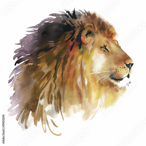 Poster Watercolor lion on a white background vector