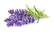 Obrazy na płótnie, fototapety, zdjęcia, fotoobrazy drukowane : Lavender flowers