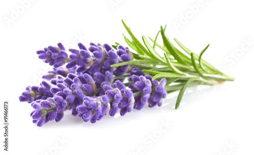 Lavender flowers - 91466173