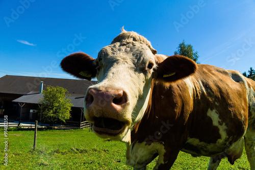Aluminium Milchkühe auf der Sommerweide