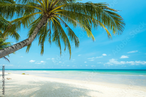 Beautiful coconut palm tree at the tropical beach , Thailand