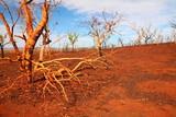 Landscape after a bushfire in Australia