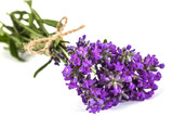 Bouquet of violet wild lavender flowers, tied with bow, isolated