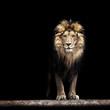 Leinwandbild Motiv Portrait of a Beautiful lion, lion in the dark