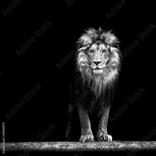 Zdjęcia na płótnie, fototapety na wymiar, obrazy na ścianę : Portrait of a Beautiful lion, lion in the dark