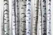 Obrazy na płótnie, fototapety, zdjęcia, fotoobrazy drukowane : seamless birch trees