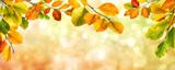 Fototapety Autumn leaves border on bokeh background