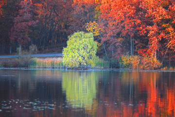 Autumn tree reflections in the lake © SNEHIT