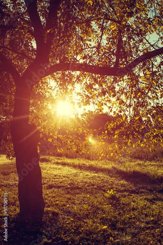 Keuken foto achterwand Bossen Meadow and Solitary Tree in the Morning Dew