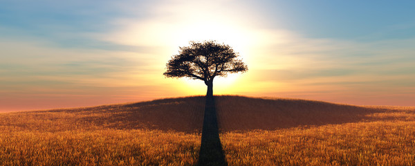 sunset and tree © juanjo