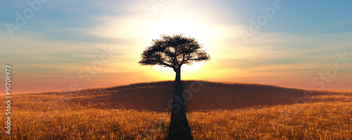 Poster Zwavel geel sunset and tree