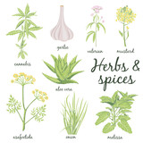 Herbs and Spices set. - 91723753