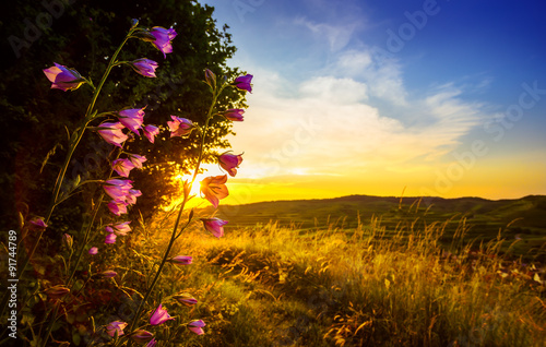 Beautiful countryside landscape with field flowers lit by sunset and mountains in the background.
