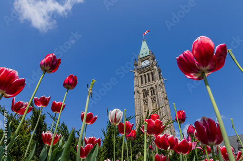 Fotografiet Peace tower and tulips at Parliament Building  Ottawa Canada