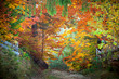 Amazing vibrant Autumn Fall Leaves colors in forest landscape