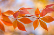 Autumn leaves background with bokeh lights - gentle colors of