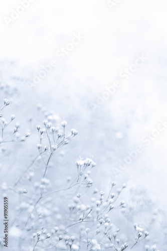 Small De-focused White Flowers with Vintage Effect as Picture Postcard - 91905559