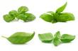 foglie di basilico collage