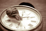 land snail and clock, in sepia tone