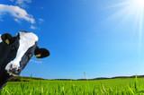 Mucca che guarda con uno sfondo di una prateria verde e un cielo azzurro