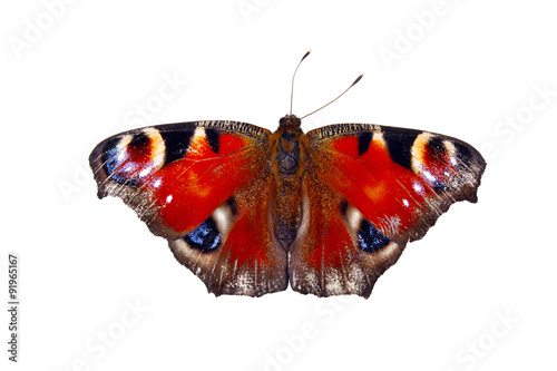 Fotobehang Vlinder European peacock inachis io