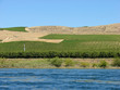 columbia river with rows of crops on bank