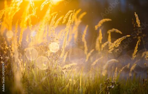 Deurstickers Honing Art autumn sunny nature background
