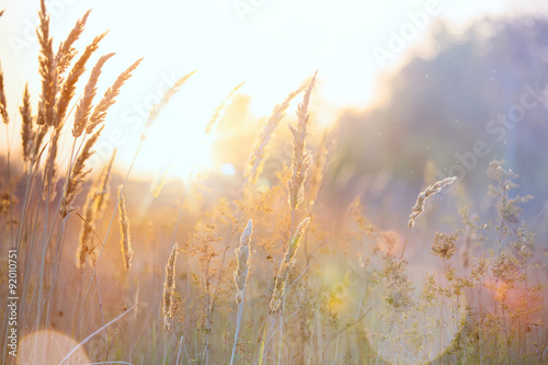 Fotobehang Natuur Art autumn sunny nature background