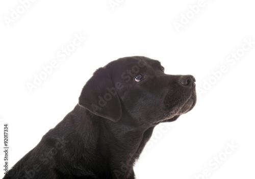 Schwarzer Hund seitlich