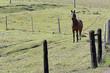 Obrazy na płótnie, fototapety, zdjęcia, fotoobrazy drukowane : Horse in pasture