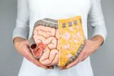 Woman holding model of human intestines in front of body