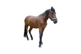 Horse isolated on a white background. Isolate.