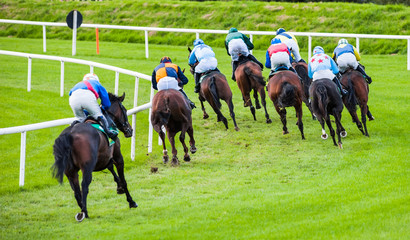 racehorses turning the race track