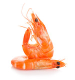 Tiger shrimps. Prawns with isolated on a white background. Seafood