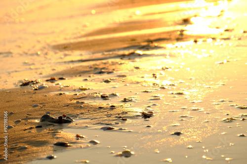 Foto op Aluminium Strand Sunset on the seashore