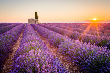 Valensole, Provence, France. Lavender field full of purple flowers