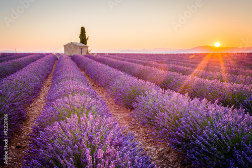 Fototapety, obrazy : Valensole, Provence, France. Lavender field full of purple flowers