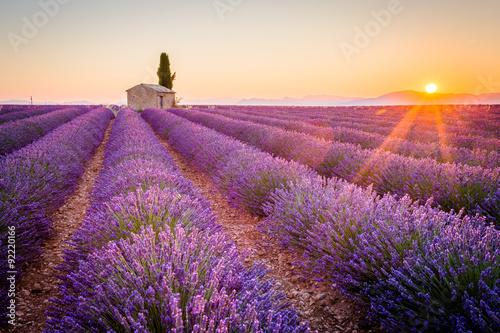 Zdjęcia na płótnie, fototapety na wymiar, obrazy na ścianę : Valensole, Provence, France. Lavender field full of purple flowers