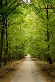 jesienna aleja drzew w lesie