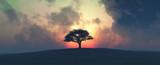 Zachód słońca i drzewa