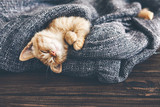 Gigner kitten sleeping