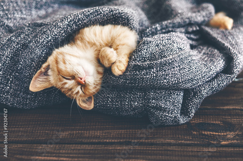 Gigner kitten sleeping Poster