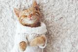 Fototapety Gigner kitten