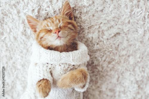fototapeta na ścianę Gigner kitten