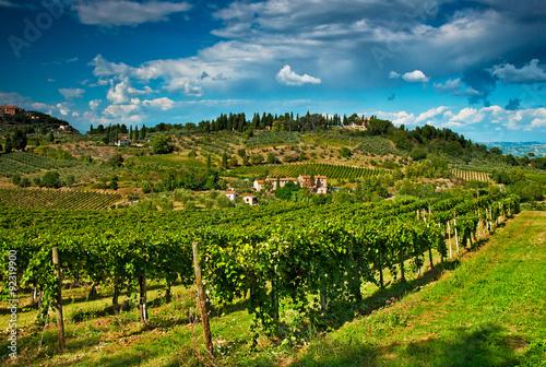 Fototapeta San Gimignano with vineyard