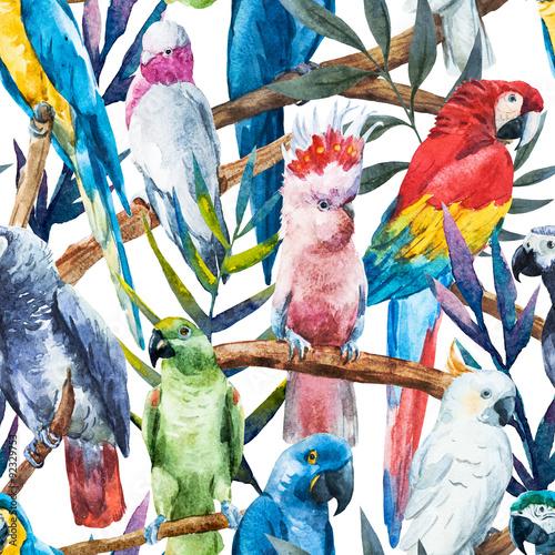 akwarela-papuga-wzor