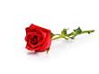 Obrazy na płótnie, fototapety, zdjęcia, fotoobrazy drukowane : Red rose on white background