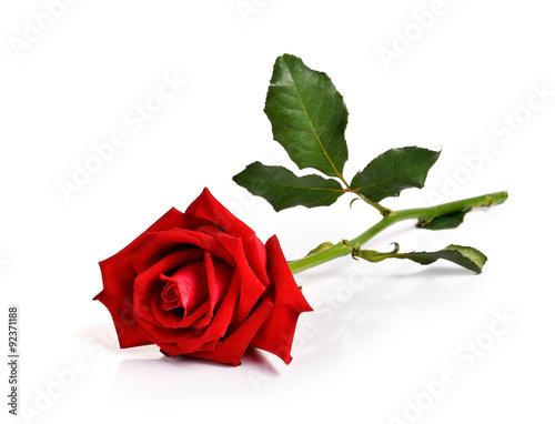 Zdjęcia na płótnie, fototapety, obrazy : Red rose on white background